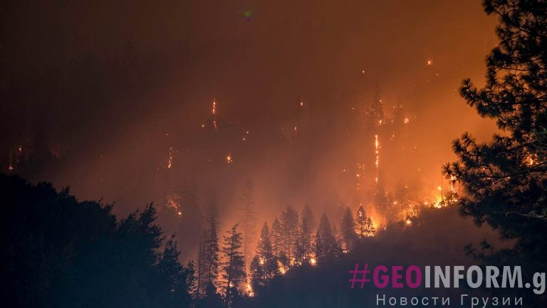 В Грузии горят ореховые плантации